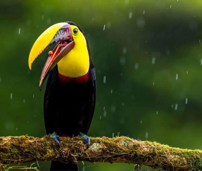 Die besten Kreditkarten für eine Reise nach Costa Rica