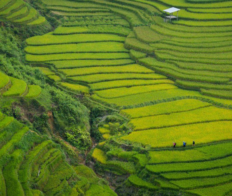 Die besten Kreditkarten für eine Reise nach Vietnam