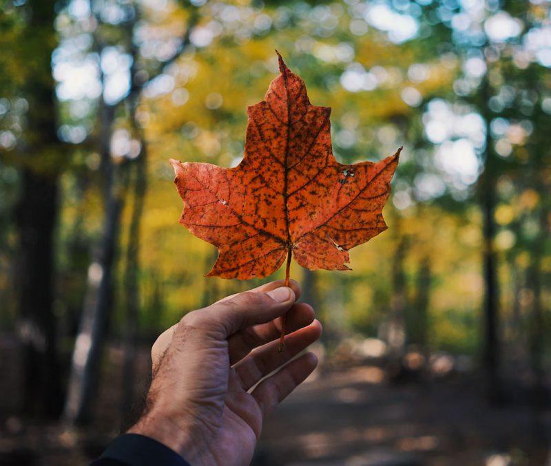 Die besten Kreditkarten für eine Reise nach Kanada
